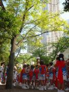 """三社まつり本祭""""傘踊り"""""""